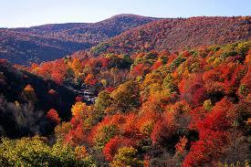 Fall Leaves in NC